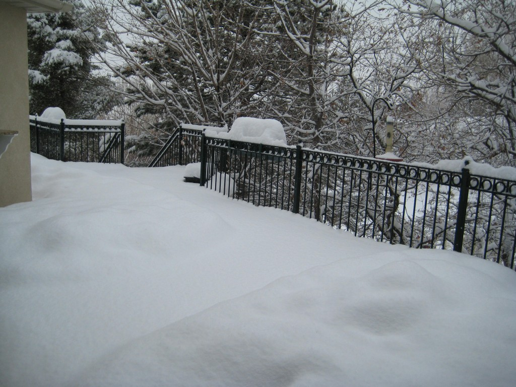 Even the path to the bird feeder begs for prints in the snow.
