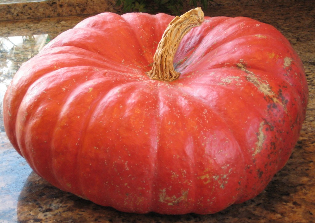 I washed off this pumpkin that I used for decoration this past fall.