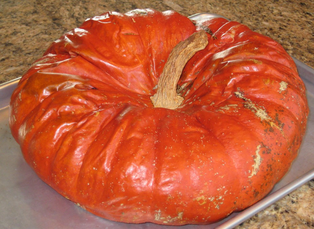 Now my pumpkin is soft and crinkly.